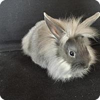 Adopt A Pet :: Splinter - Conshohocken, PA