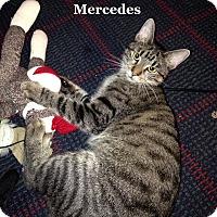 Adopt A Pet :: Mercedes - Bentonville, AR