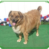 Adopt A Pet :: JACK - Marietta, GA