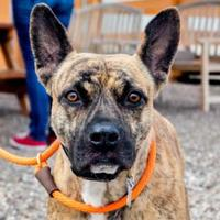 Adopt A Pet :: Barny - Rio Rancho, NM