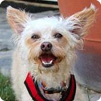 Adopt A Pet :: Dusty - La Costa, CA
