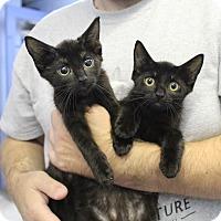 Adopt A Pet :: Maryland & Montana - Cape Girardeau, MO