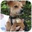 Photo 2 - Chihuahua Dog for adoption in Vista, California - Chi Chi