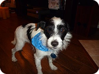 Terrier (Unknown Type, Medium) Mix Dog for adoption in Humble, Texas - Fred