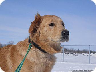 Golden Retriever/Labrador Retriever Mix Dog for adoption in Morden, Manitoba - Bella