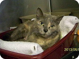 Domestic Shorthair Cat for adoption in Dover, Ohio - Lavendar