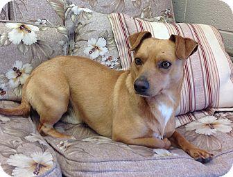 Dachshund Mix Dog for adoption in Scottsboro, Alabama - Kennel D6