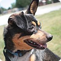 Adopt A Pet :: Molly - Stilwell, OK