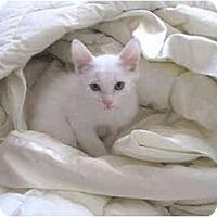 Adopt A Pet :: Chester Superman - Mesa, AZ