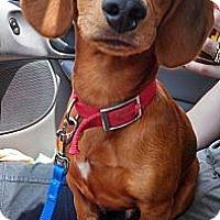 Adopt A Pet :: Jake - Toronto, ON