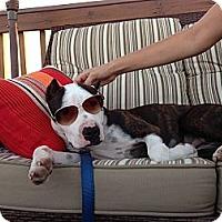 Adopt A Pet :: Booker T. Jones - Reisterstown, MD