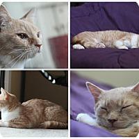 Adopt A Pet :: Money - Alexandria, VA