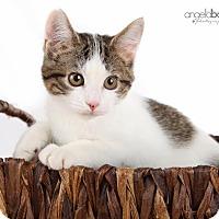 Adopt A Pet :: Aurora - Eagan, MN