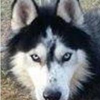 Adopt A Pet :: Flash - Memphis, TN