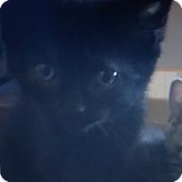 Adopt A Pet :: Honor - Trevose, PA