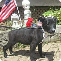 Adopt A Pet :: Ferbe - West Chicago, IL