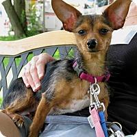 Adopt A Pet :: Molly - New Kensington, PA