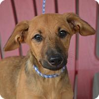 Adopt A Pet :: PETRA - New Iberia, LA