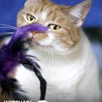 Adopt A Pet :: Olive - Williamsburg, VA
