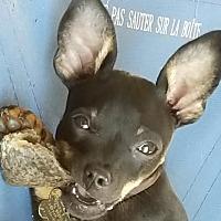 Adopt A Pet :: Papi - Newnan, GA