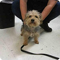 Adopt A Pet :: TOBY - Waterford, VA