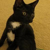 Adopt A Pet :: Princess Charlotte - Harrisburg, PA