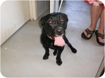Terrier (Unknown Type, Small) Mix Dog for adoption in Wallaceburg, Ontario - Jax