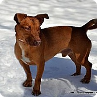 Adopt A Pet :: Red - PENDING, in Maine! - kennebunkport, ME