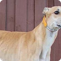 Adopt A Pet :: Empire - Pearl River, LA