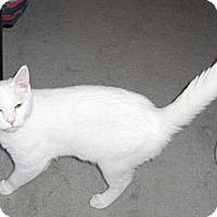 Adopt A Pet :: Chad - Richmond, VA