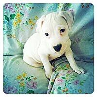 Adopt A Pet :: Penelope - Louisville, KY