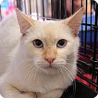 Adopt A Pet :: Maki - Santa Monica, CA