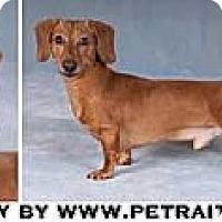 Adopt A Pet :: Larry - Chicago, IL