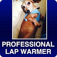 Adopt A Pet :: Ozzie - Morrisville, PA