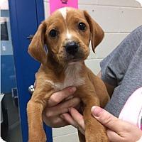 Adopt A Pet :: Greg - Barnegat, NJ