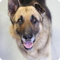 Adopt A Pet :: Kevin - Yukon, OK