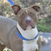 Mixed Breed (Medium) Mix Dog for adoption in Evans, Colorado - Bear