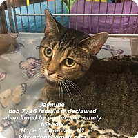 Adopt A Pet :: Jasmine - Marlboro, NJ