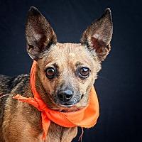 Adopt A Pet :: KITA - Las Vegas, NV