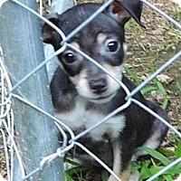 Adopt A Pet :: Tiny - Bel Air, MD