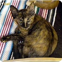 Adopt A Pet :: Cali - Jacksonville, FL