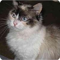 Adopt A Pet :: Chardonnay - Davis, CA