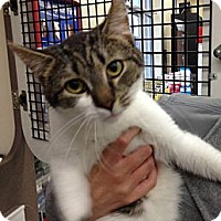 Adopt A Pet :: Triangle - Troy, OH
