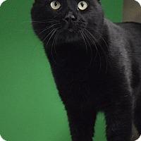 Adopt A Pet :: Stanley - Midland, TX