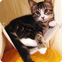 Adopt A Pet :: Snoopy - N. Billerica, MA