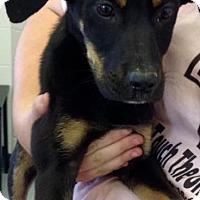 Adopt A Pet :: Brook - Tampa, FL