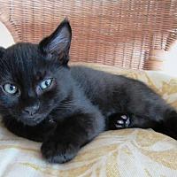 Adopt A Pet :: Manuel - Orange, CA