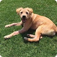 Adopt A Pet :: Monet #0618 - Fort Worth, TX