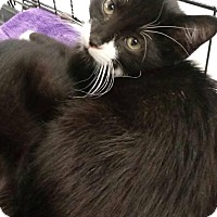 Adopt A Pet :: Mason - Waldorf, MD