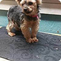 Adopt A Pet :: Elvis - Crump, TN